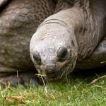 Wat de reuzenschildpad met gedragsverandering binnen organisaties te maken heeft