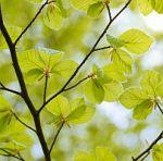 Groen en Het Nieuwe Werken