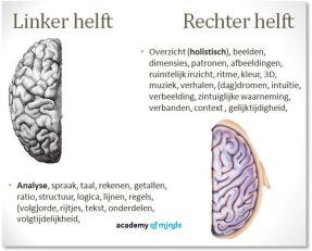 Het Nieuwe Werken behoeft het gebruik van beide hersenhelften