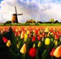 Tulpen en Het Nieuwe Werken