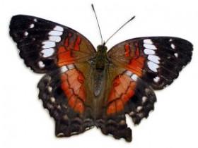 butterfly-772349-m