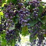 Het Nieuwe Werken: pas op voor laaghangend fruit