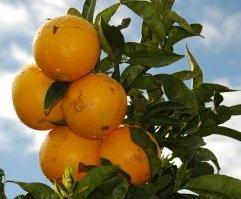 HNW en laaghangend fruit